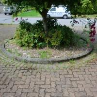 mossy brick driveway before power washing