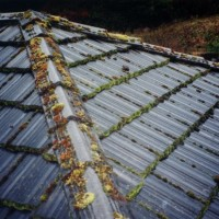 concrete tile roof before moss removal